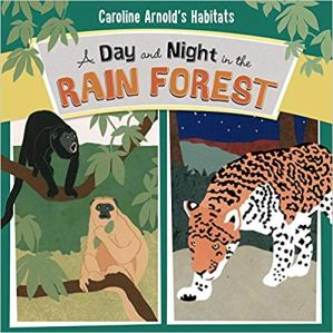 day and night in rainforest